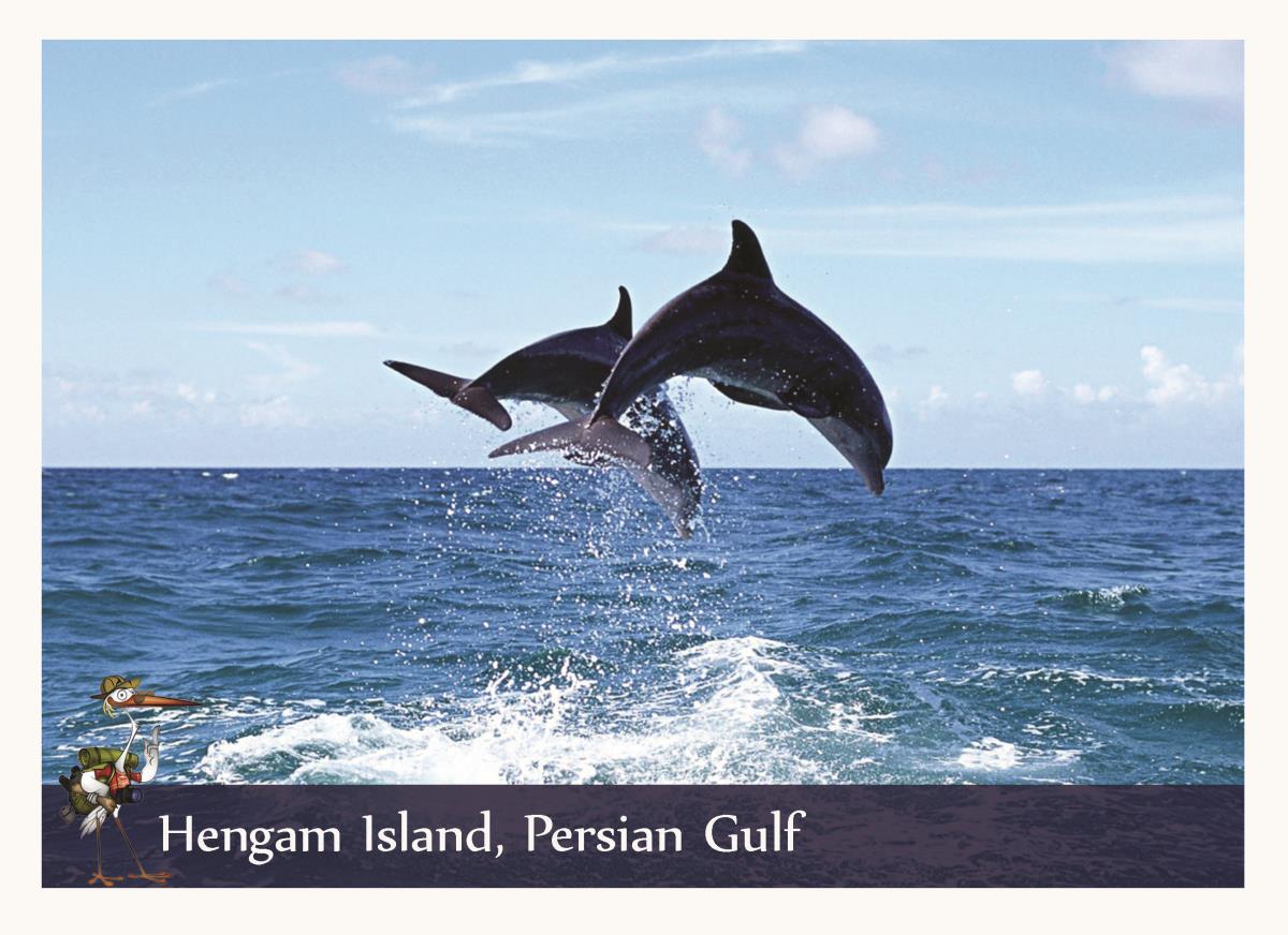Dolphin Hengam