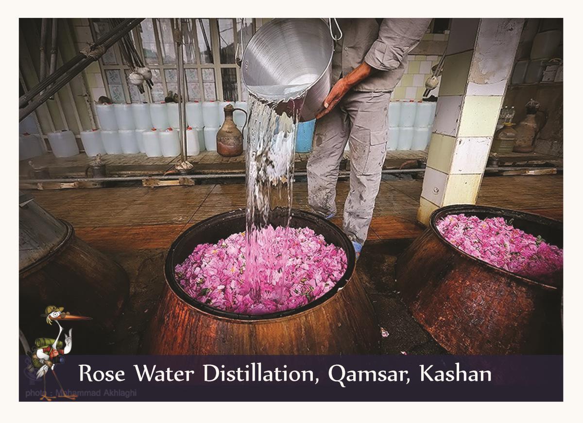 Rose water distillation