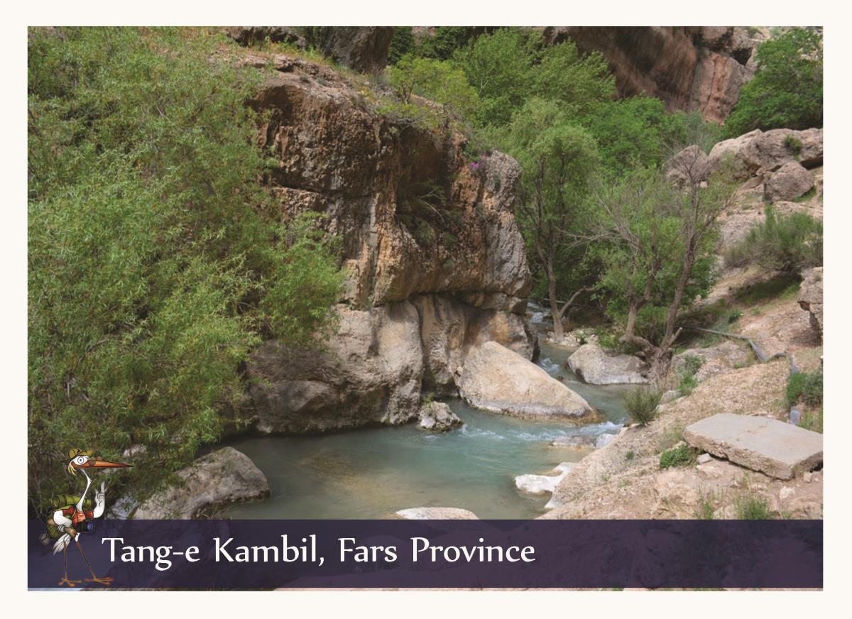 Tang Kambil